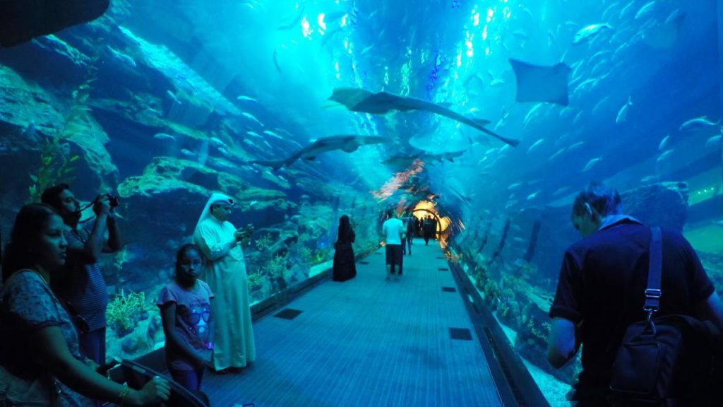 Dubai Aquarium and Underwater Zoo in Dubai